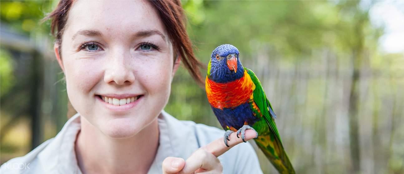 auckland zoo parakeet