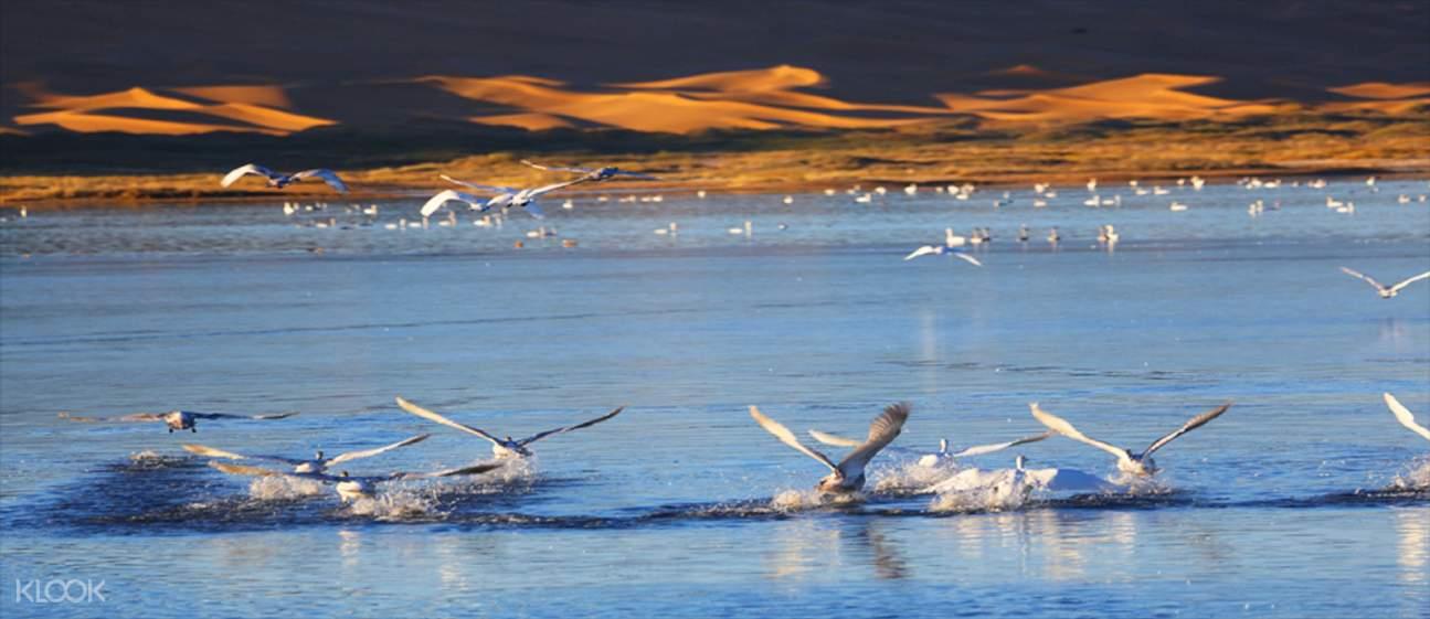 騰格里天鵝湖