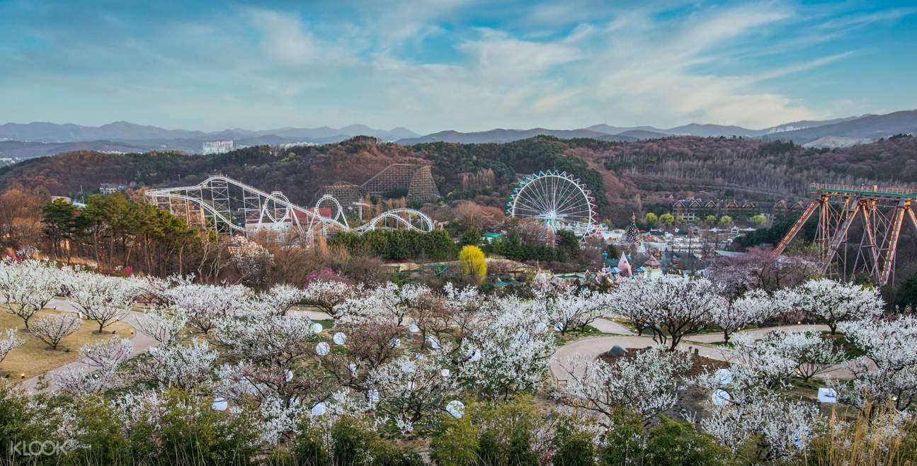 Everland Korea Fireworks