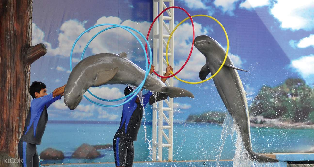 pattaya dolphin world tickets