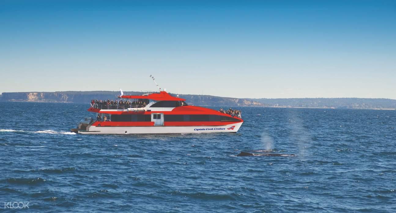 雪梨賞鯨遊船之旅