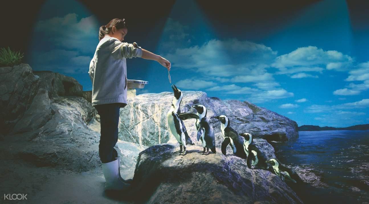 sea life bangkok penguin feeding