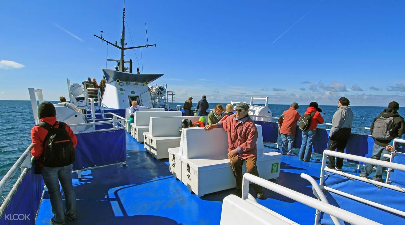 冰岛观鲸船游