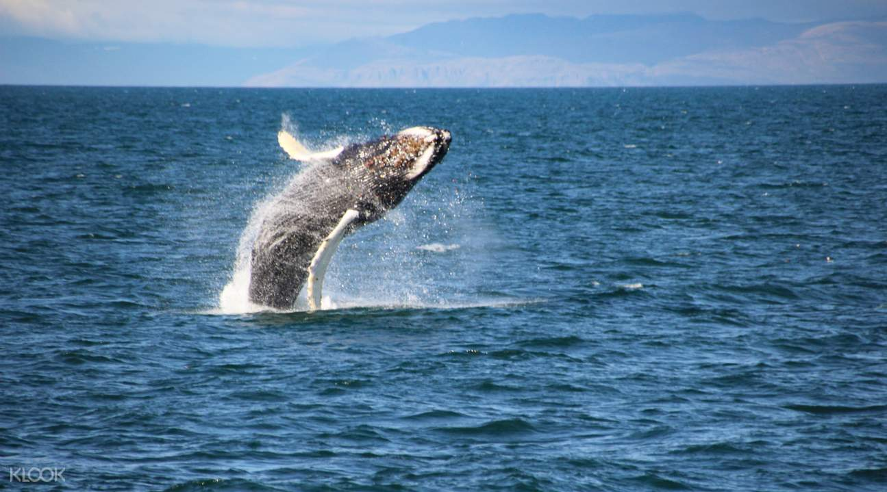 whale watching classic tour