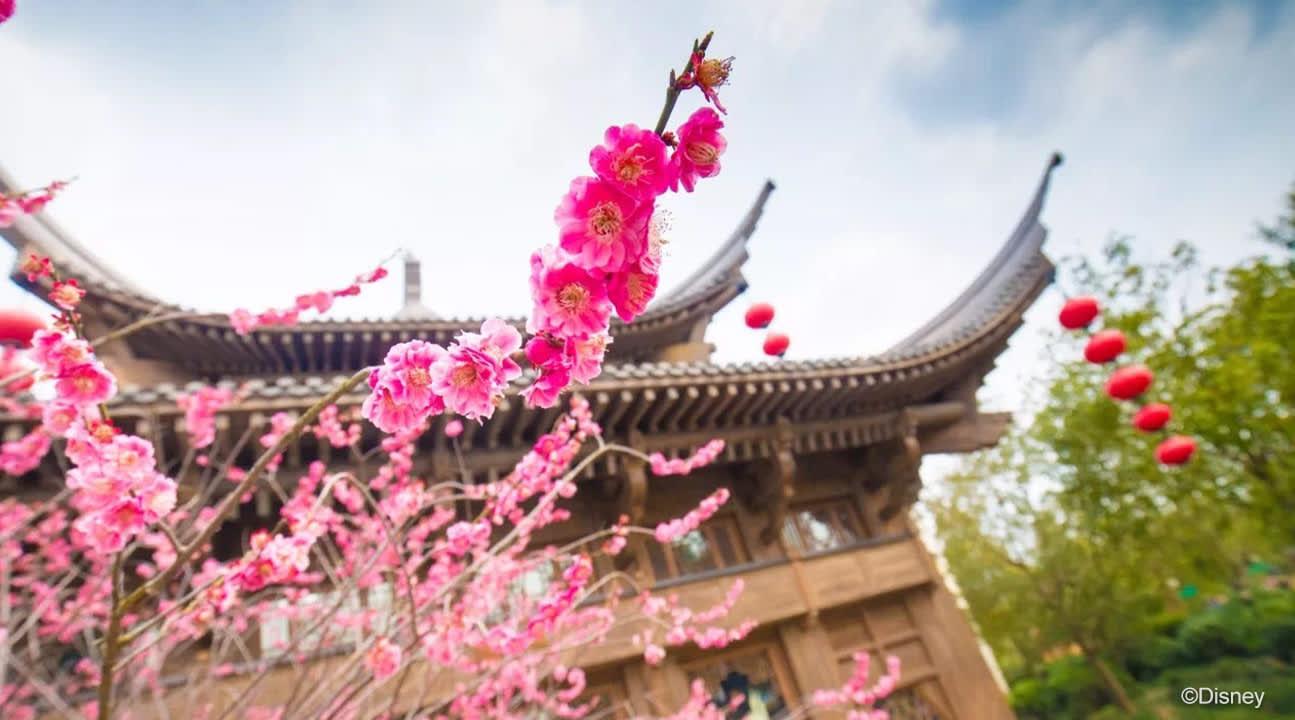 shanghai disneyland spring flowers