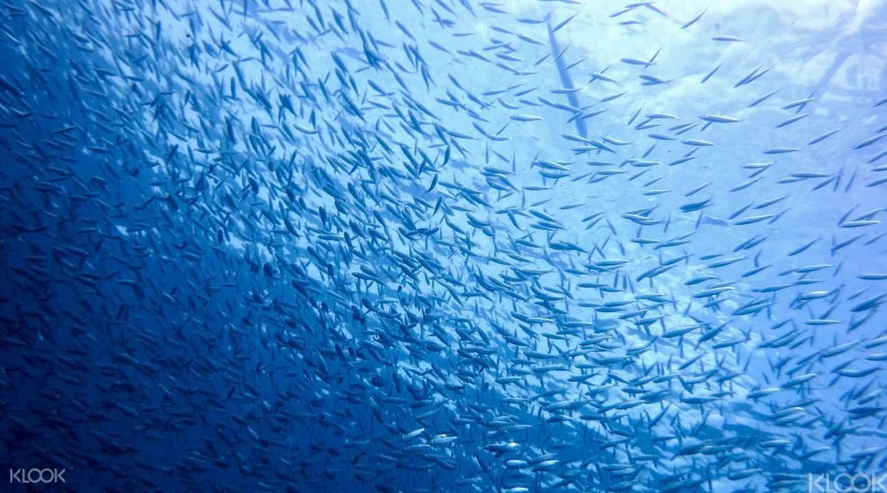 Fish in Kyafa Beach Okinawa