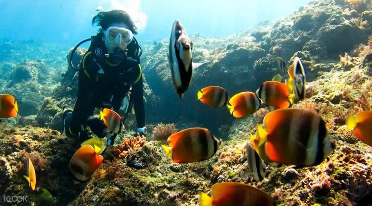 海龜共泳體驗潜水