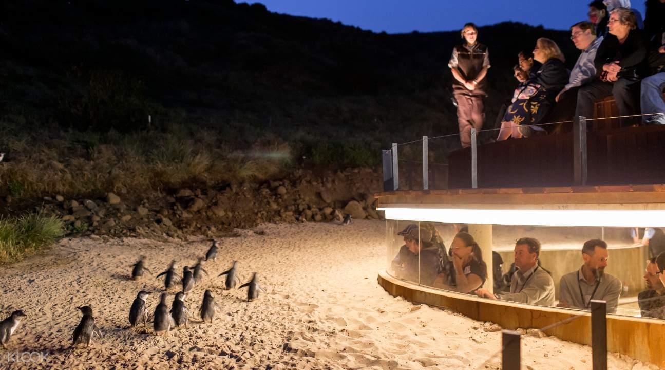 penguin parade australia