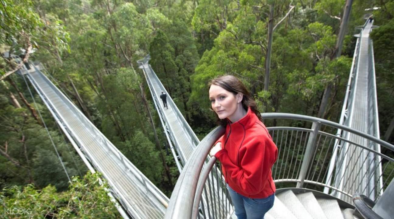 Otway Fly Treetops Walk tickets