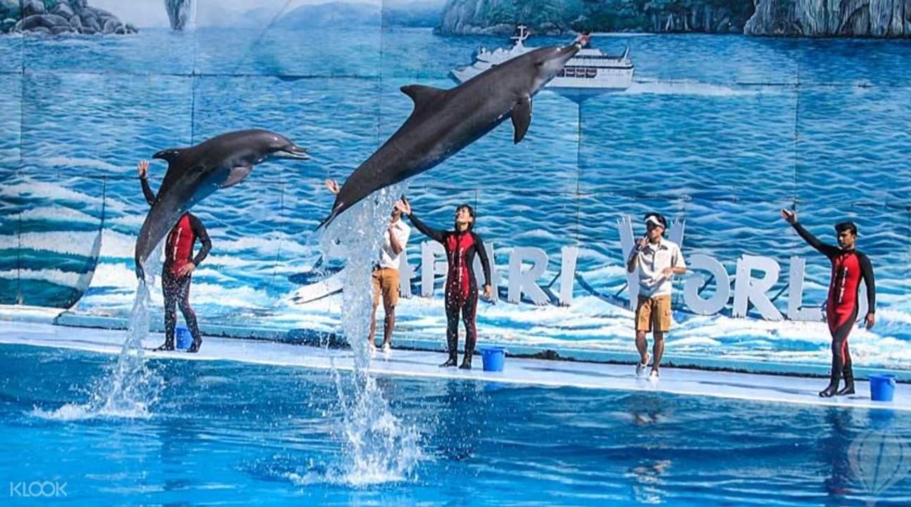 曼谷野生动物园海豚秀