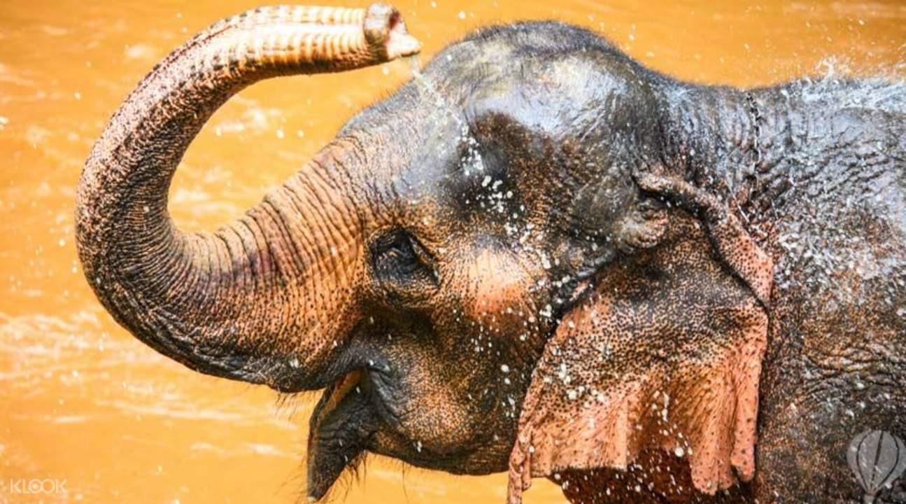 清邁騎大象