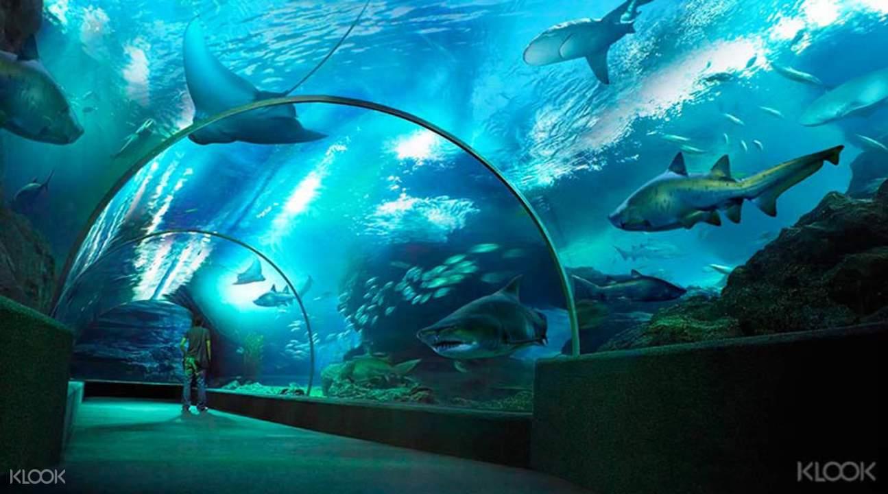 暹罗海洋世界海底隧道