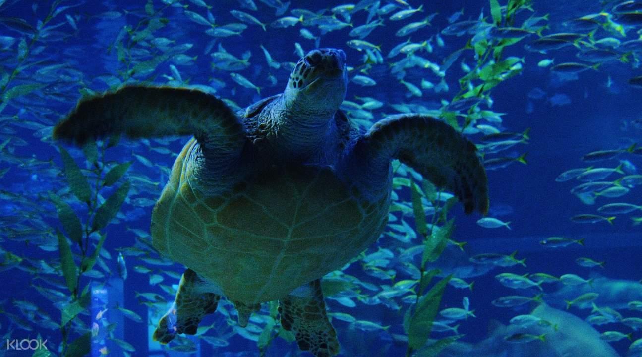 sea aquarium admission ticket klook