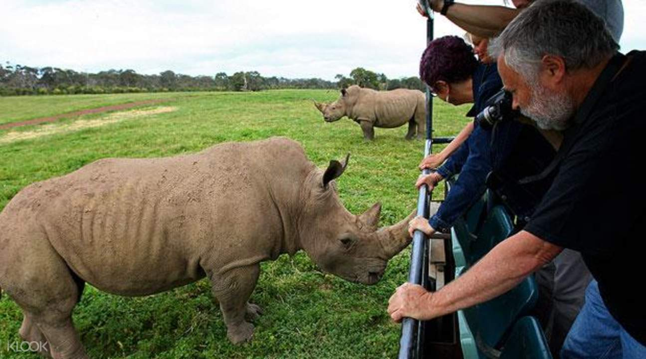 华勒比野生动物园犀牛与游客