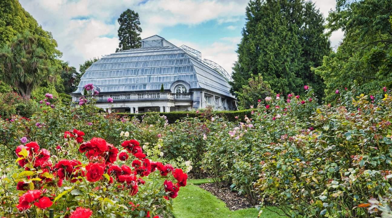 Christchurch Botanic Gardens Rose