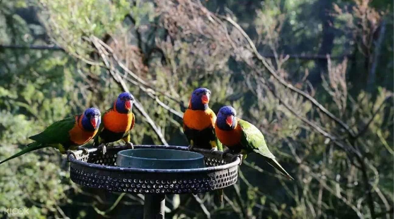 墨尔本动物园鹦鹉