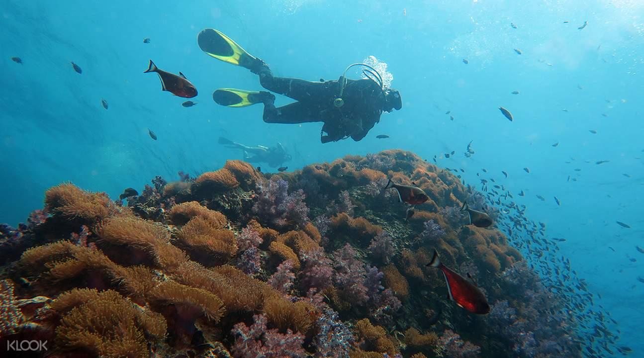 巴厘島PADI潜水課程3