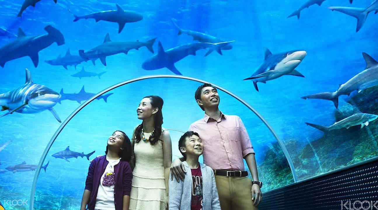 Sentosa Fun Pass Singapore Play 3 5 Max Klook Sea Aquarium Dewasa Tiket Park