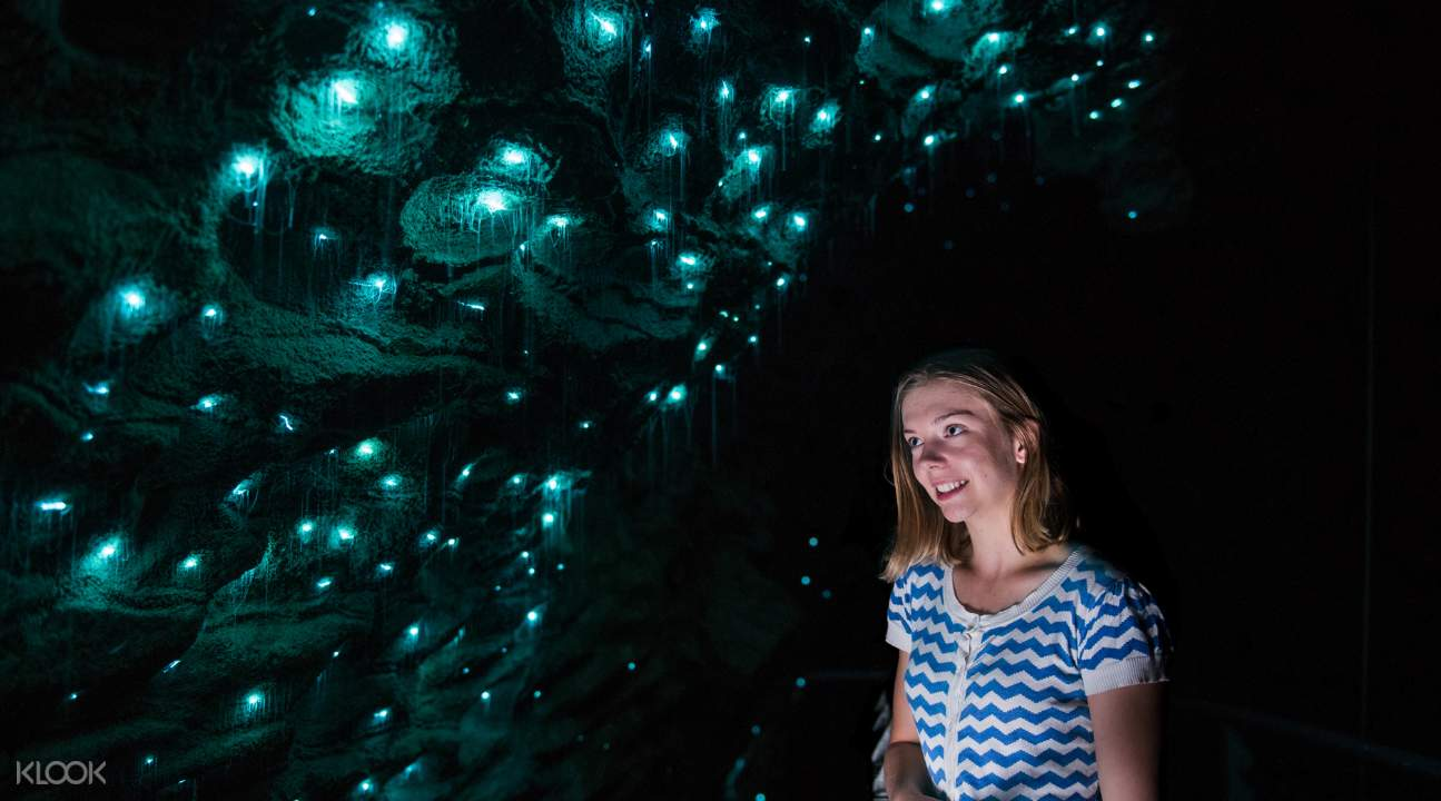 Glowworms at Ruakuri Cave