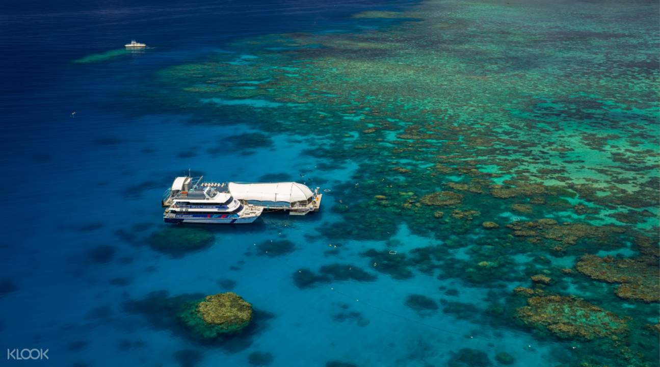 Great Barrier Reef Coral Viewing