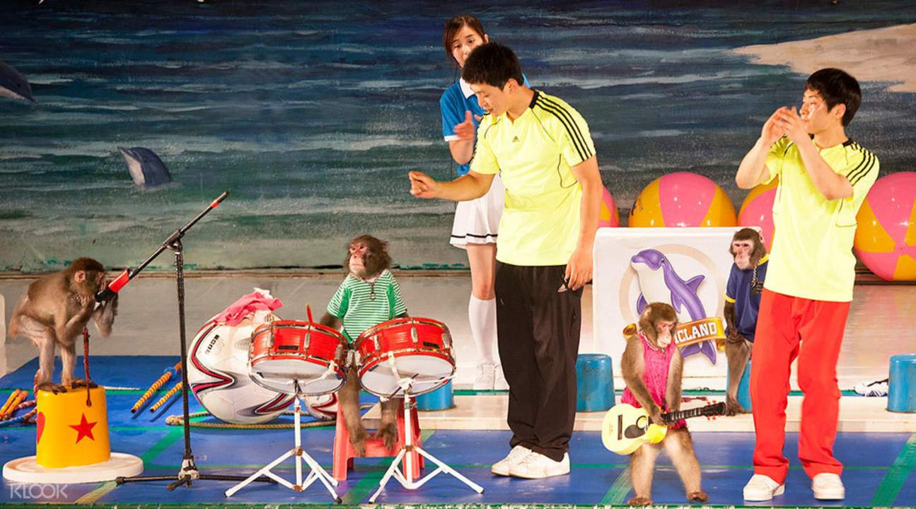 濟州島太平洋樂園動物表演