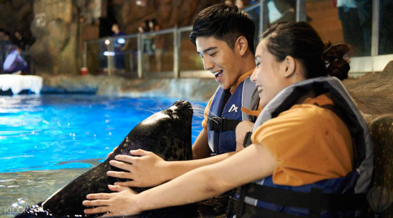 ocean park seal encounter