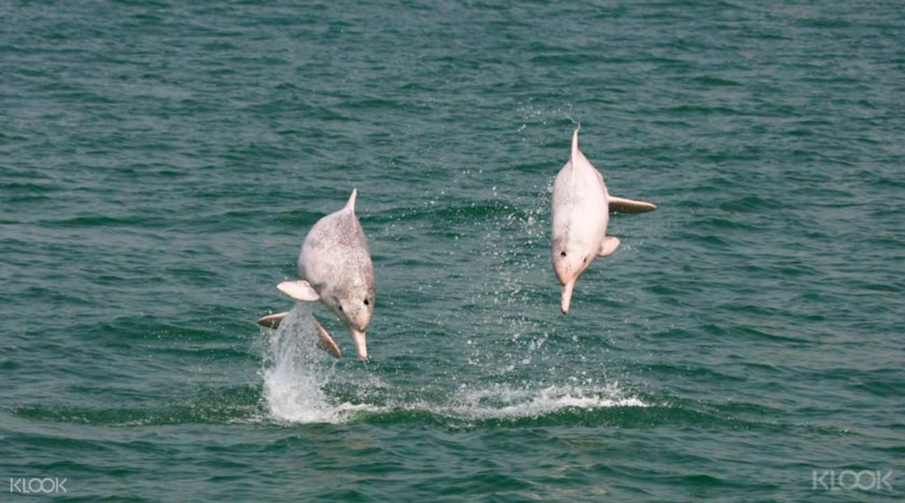 hong kong dolphin tour