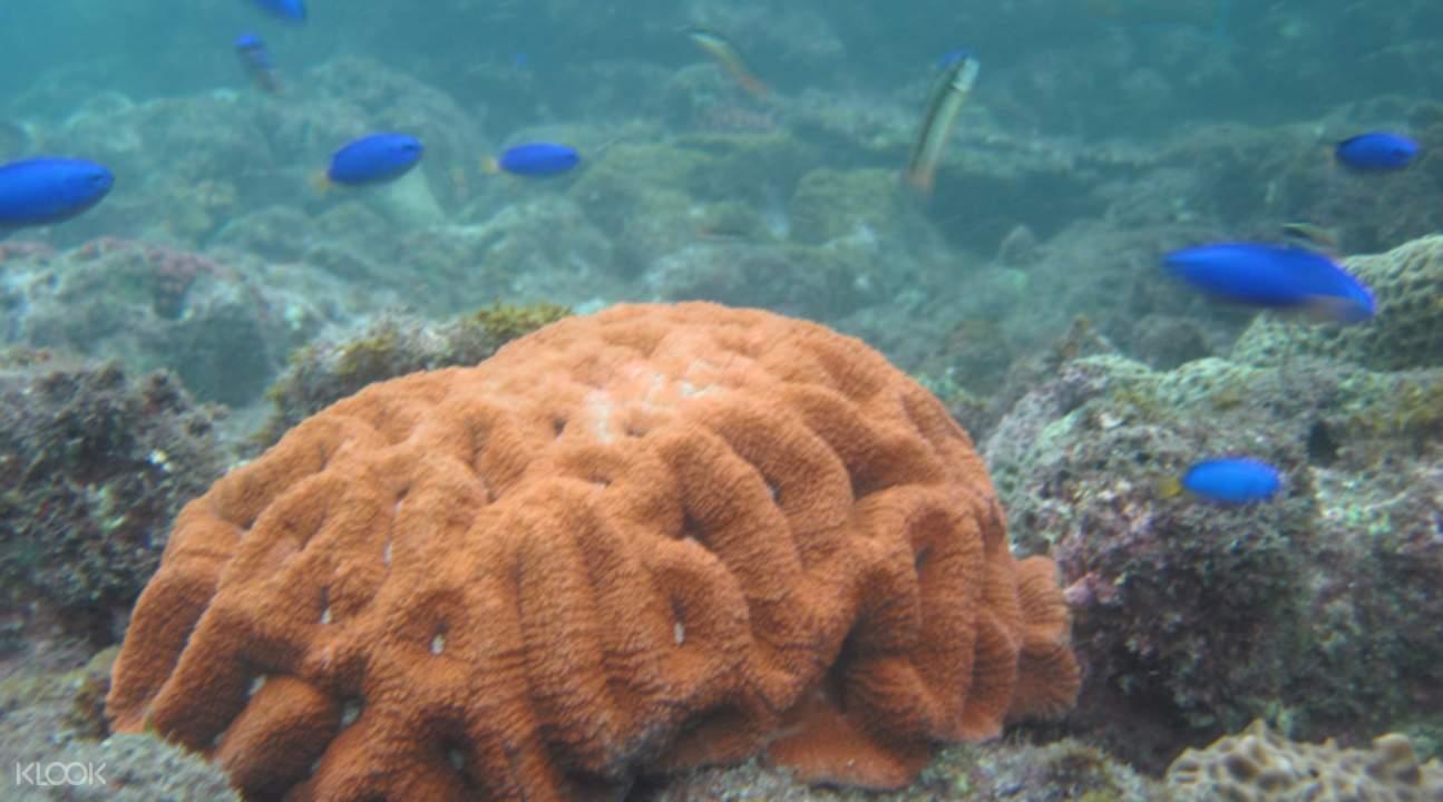 Penghu Snorkeling