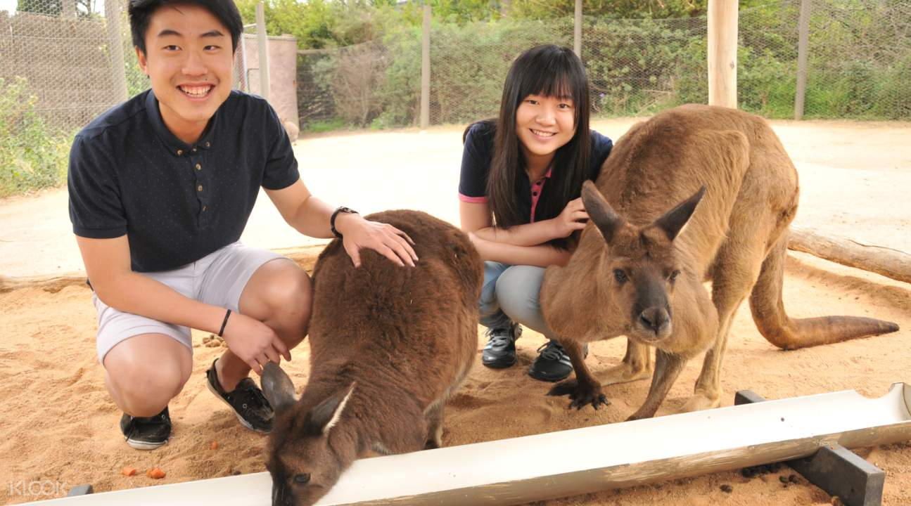 melbourne zoo discount tickets