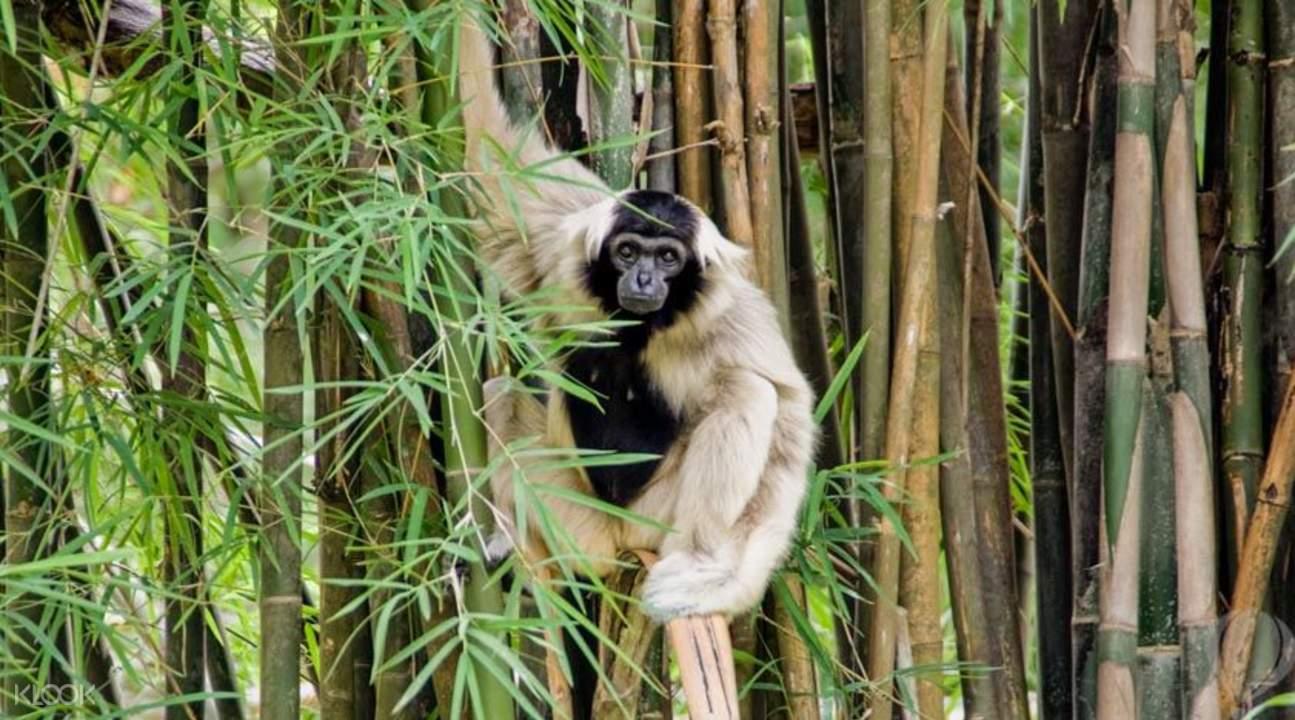 Обезьяна в зоопарке Кхао Кхео в Паттайе