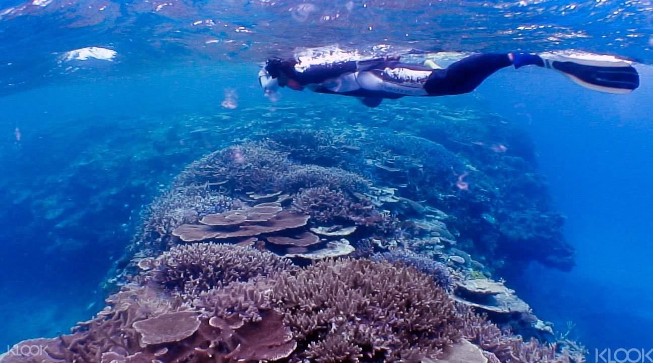卡雅法海岸慢潜和浮潜5