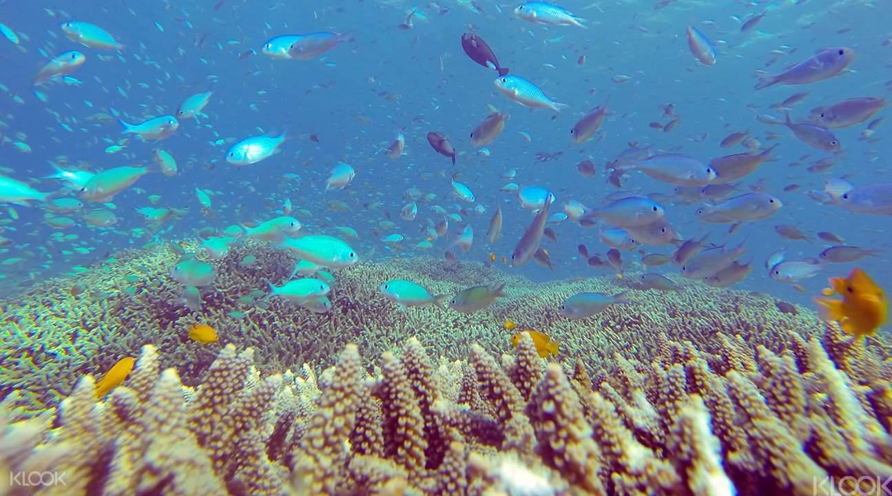 Snorkel in Amed