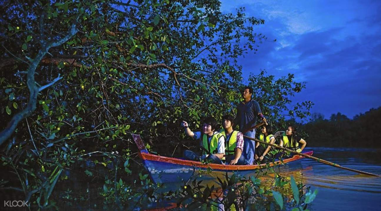 Đi thuyền ngắm đom đóm Kuala Selangor