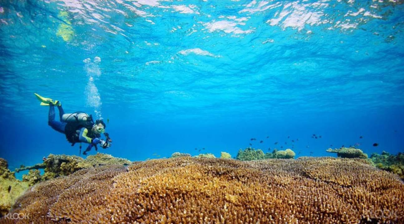 阿嘉島潜水體驗