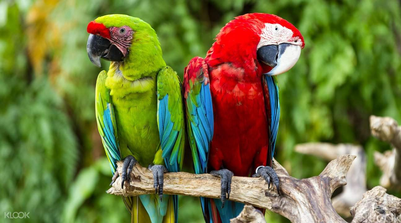 巴厘岛鸟园