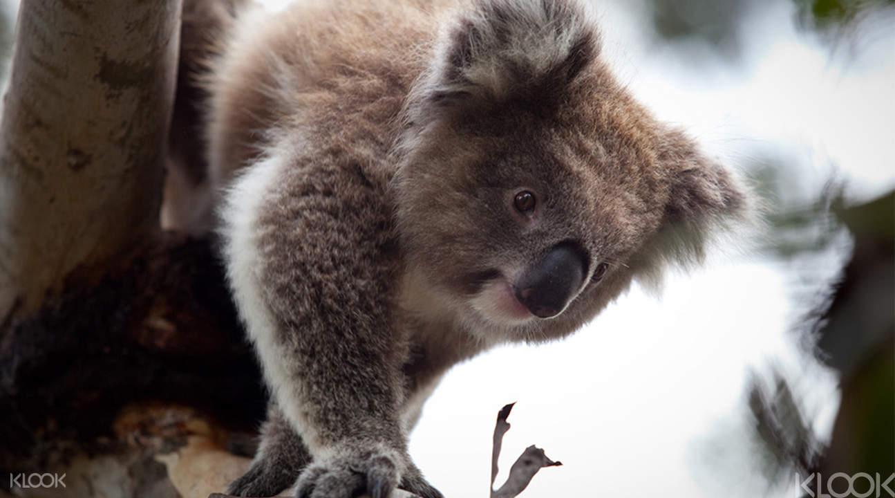australia iventure flexi attractions