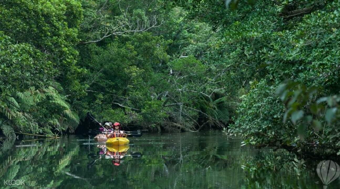 紅樹林或海上划獨木舟