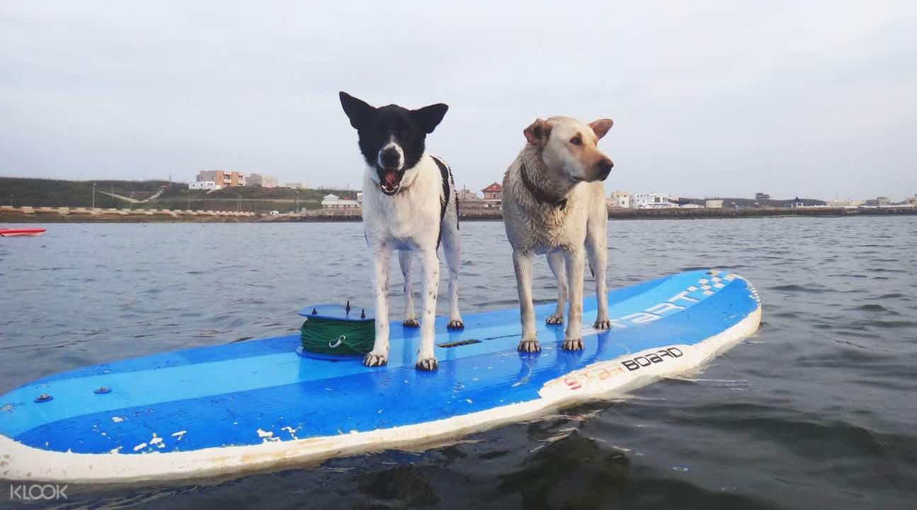 澎湖水上活動