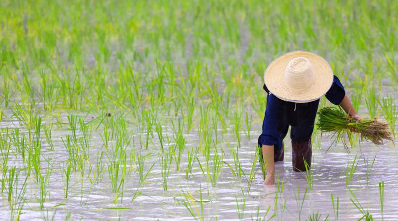 rice fields tour Bali