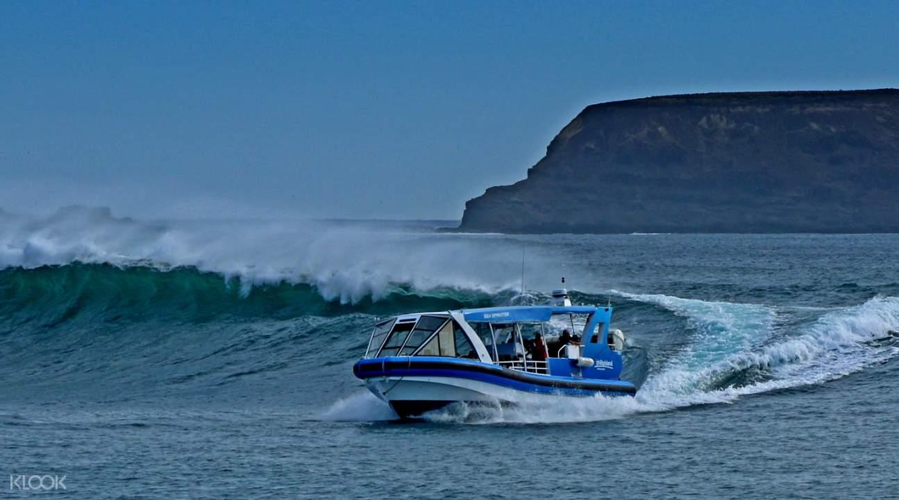 phillip island boat tour