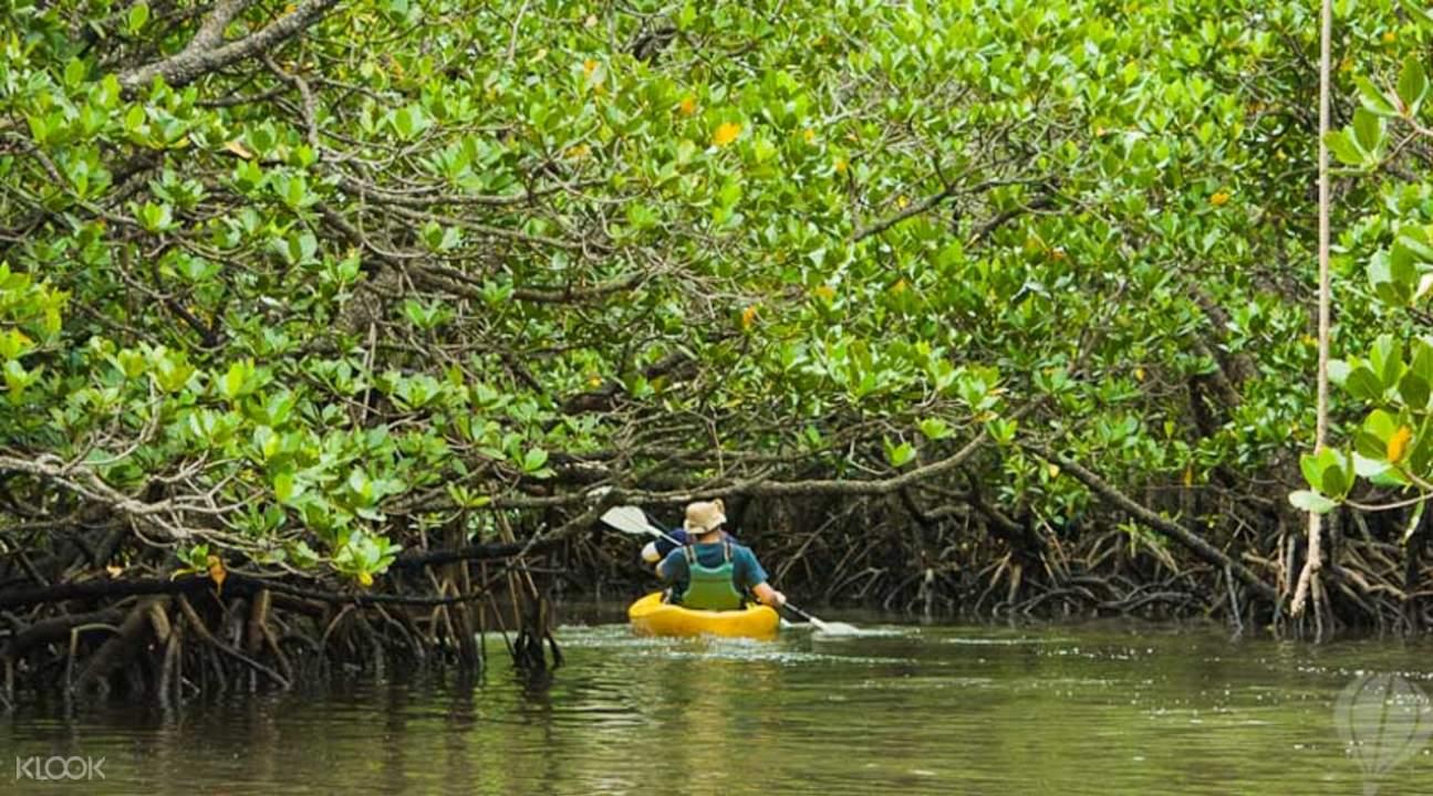 红树林或海上划独木舟