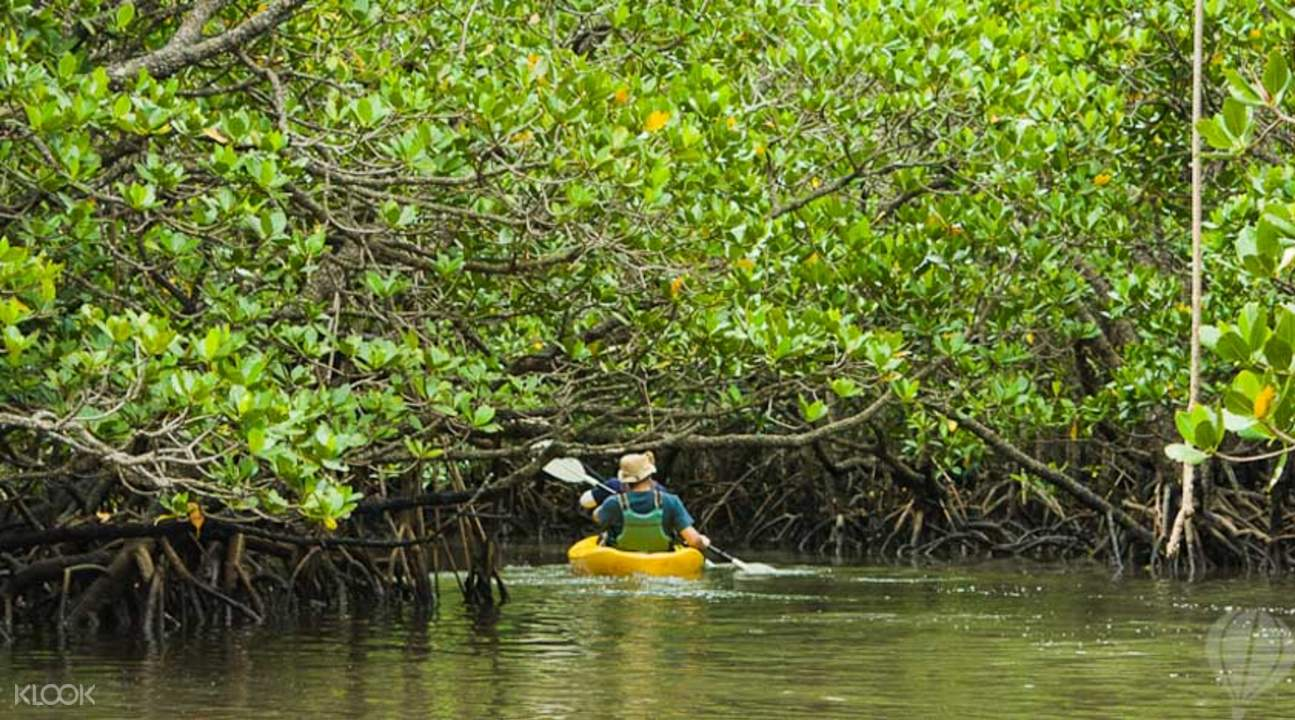 Sea & Mangrove Kayaking