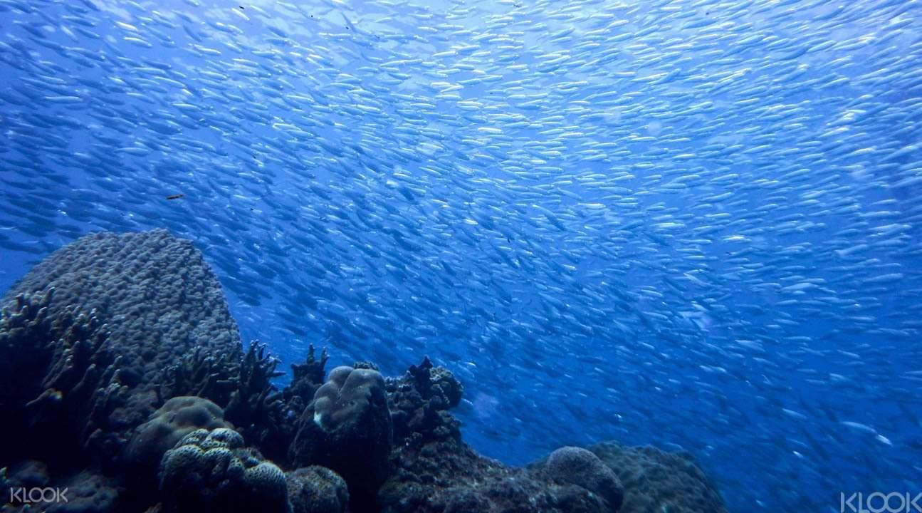 冲绳卡雅法海岸潜水5
