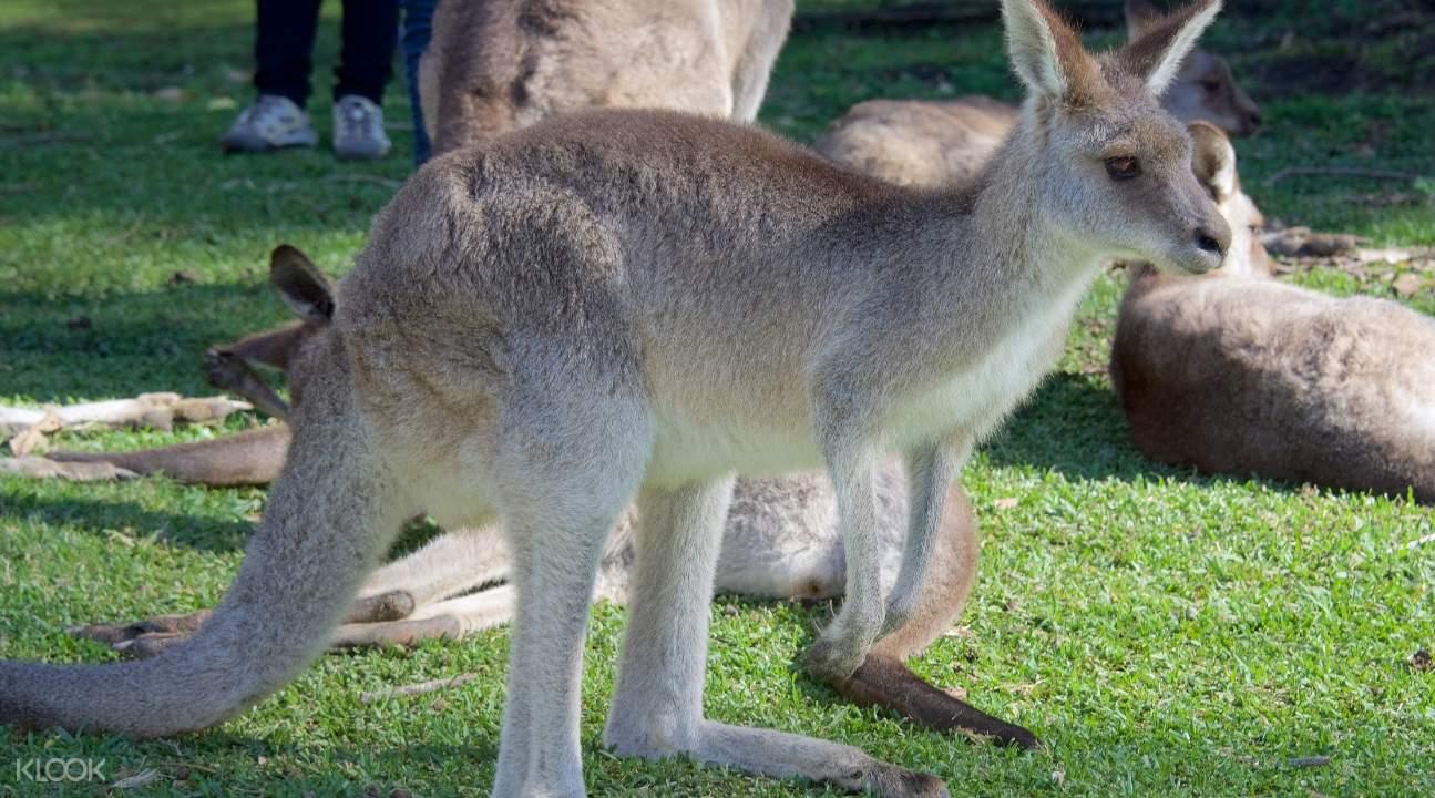 黄金海岸野生动物园