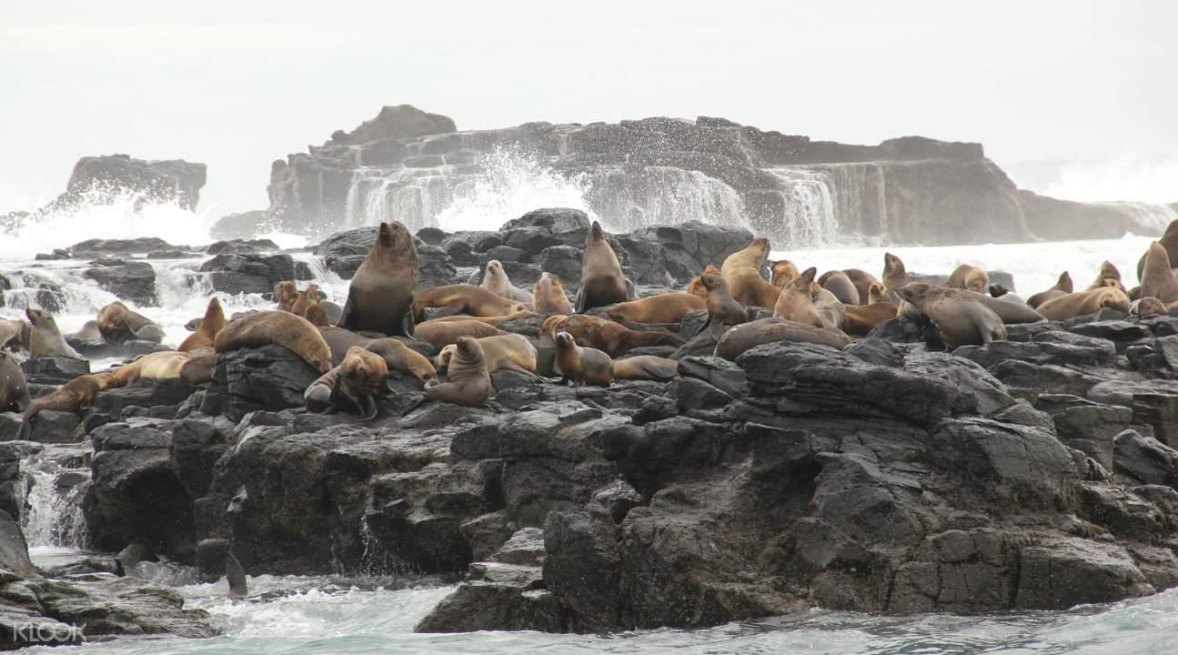 菲利普岛海豹岩
