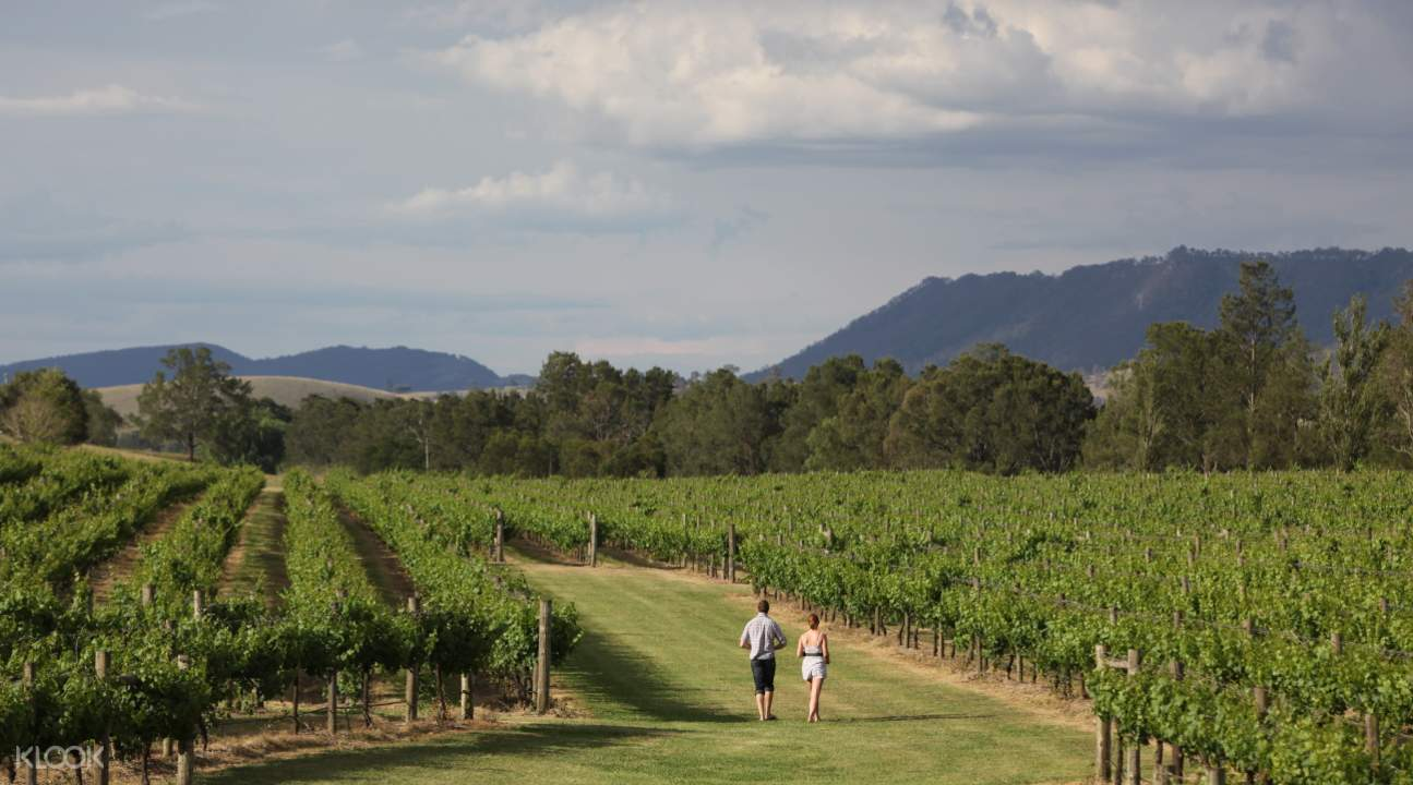 Hunter Valley from sydney