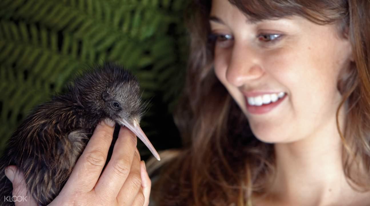 新西蘭奇異鳥