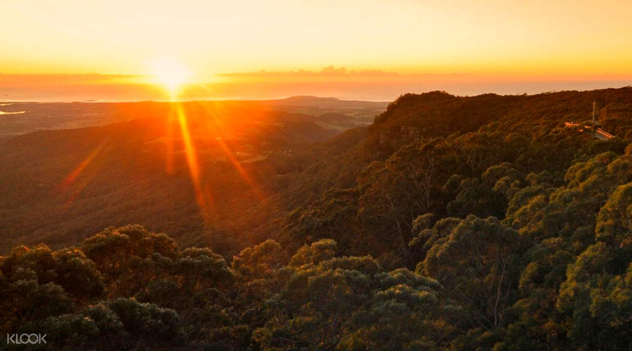 sunset illawarra fly treetops walk