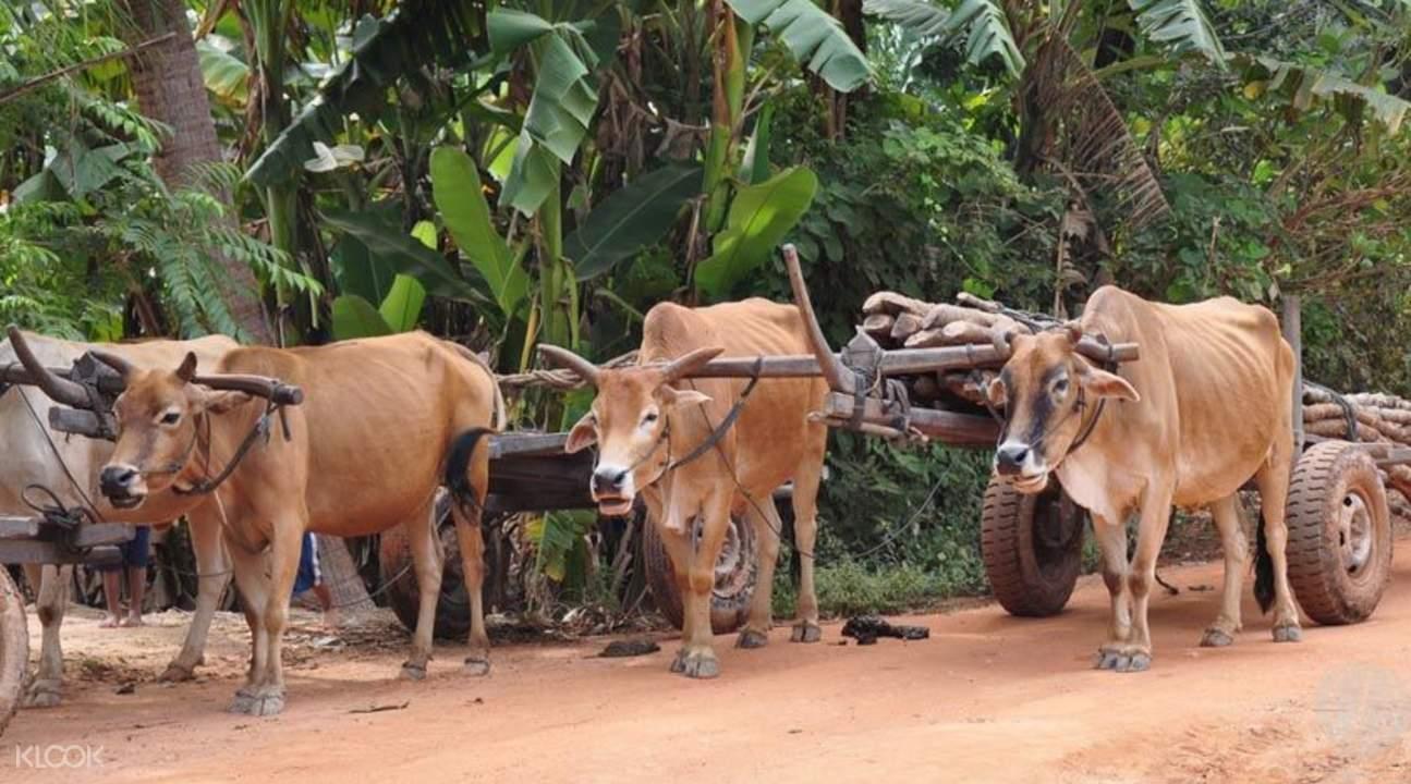 甲虫村农民生活体验
