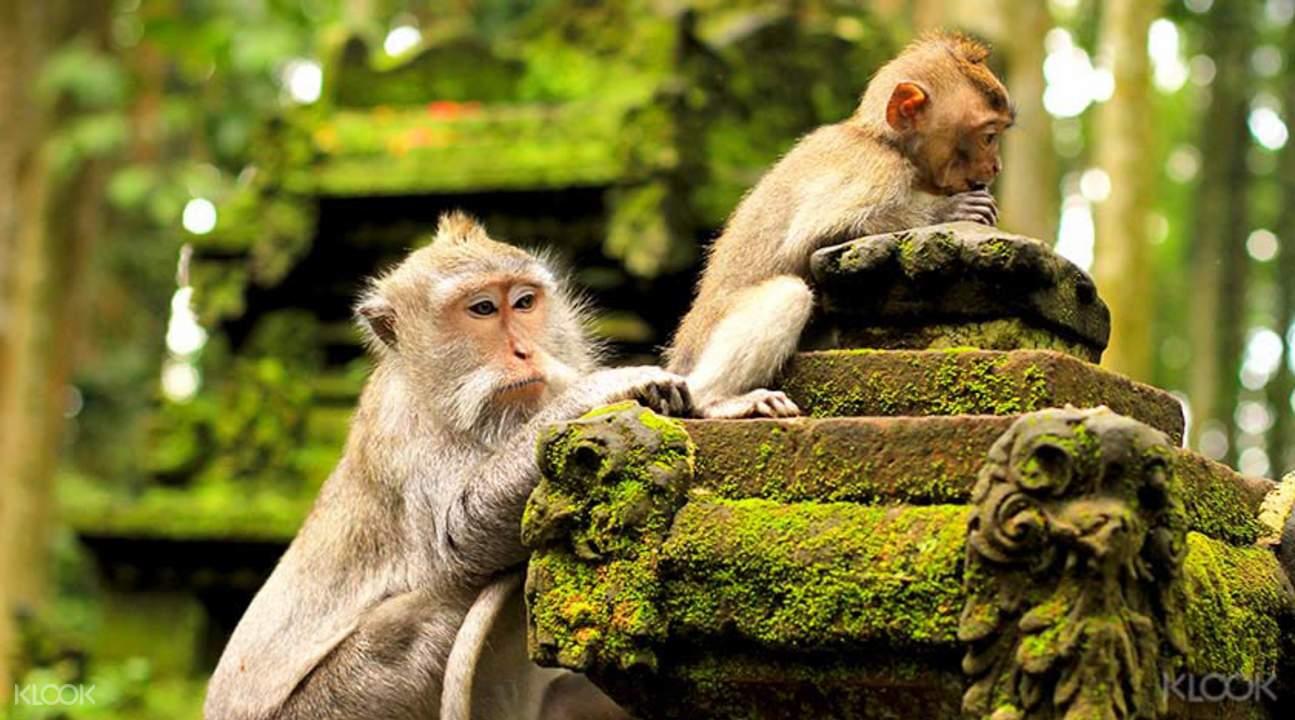 Bali Day trips
